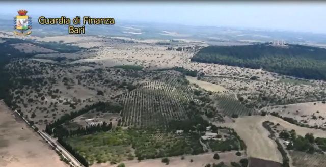 GDF BARI: SEQUESTRATE 850 PIANTE DI MARIJUANA IN UN CASOLARE AI PIEDI DI CASTEL DEL MONTE