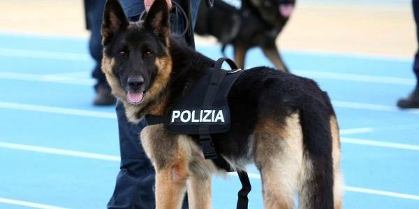 Frosinone: Di te mi…fido! Un poliziotto a quattro zampe
